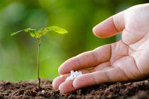 Cómo Fertilizar el Jardín