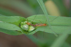 Como evitar que los mosquitos coman las plantas