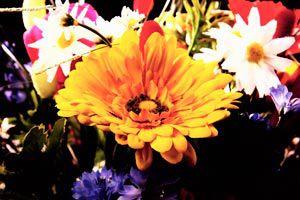 Ilustración de Cómo adornar con flores naturales