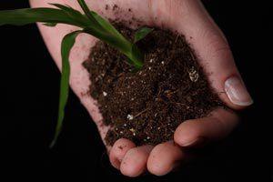Ilustración de Como saber cuando trasladar de maceta una planta