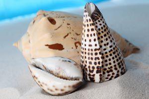 Como hacer velas con caracolas de mar