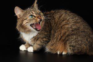C mo ba ar al gato - Banar gatos ...