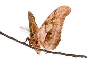 Trucos para eliminar las polillas de la ropa. Cómo combatir larvas y polillas con remedios caseros