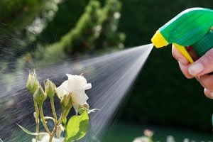 Ilustración de Remedio Casero para Eliminar las Plagas del Jardín