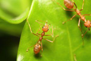 Ilustración de Cómo Eliminar las Hormigas del Jardín