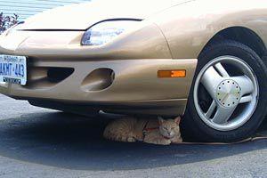 Como alejar los gatos del coche