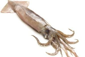 Ilustración de Cómo elegir los calamares