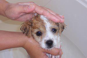 Cómo prevenir el golpe de calor de las mascotas