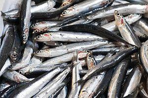 Cómo desalar las anchoas