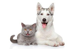 Como lograr que los perros y gatos sean amigos