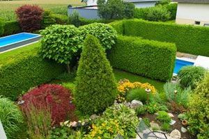 Ilustración de Cómo utilizar arbustos para decorar