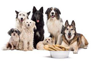 Cómo elegir al Perro Ideal