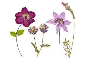 Cómo prensar flores y hojas