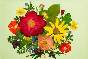 Ilustración de Cómo realizar manualidades con flores y hojas prensadas