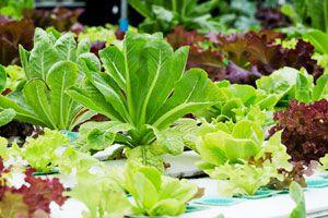 C mo hacer un jard n hidrop nico for Plan de negocios de un vivero de plantas