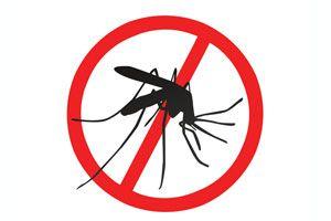 Cómo prevenir el dengue