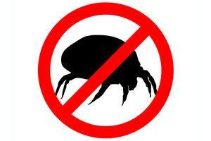 Consejos para evitar los ácaros en el hogar. Qué son los ácaros y cómo eliminarlos. Limpia tu casa de los ácaros