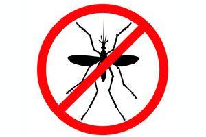 Ilustración de Cómo hacer un Repelente casero para Mosquitos