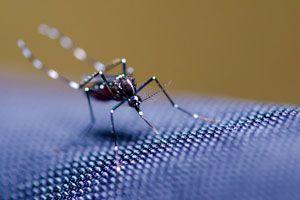Cómo hacer una Trampa Casera para Mosquitos