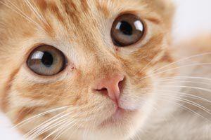 Cómo cuidar a nuestro gato para que luzca saludable y limpio