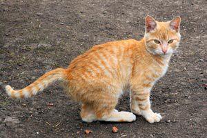 Cómo vacunar a los gatos