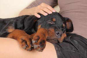 Como ayudar a una mascota a superar la ansiedad por separación