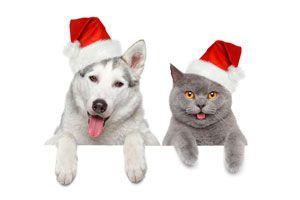 Cómo ayudar a nuestras mascotas a pasar las Fiestas Navideñas sin sufrimiento
