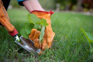 Ilustración de Como eliminar las malas hierbas del jardín