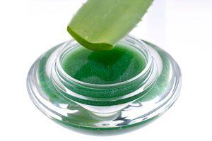 Con la crema de aloe vera podremos hacer otras recetas o aplicar sobre la piel. Con esta receta obtendrás aloe vera pura. Cremas caseras de aloe vera