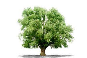Cómo elegir árboles para el jardín. Las mejores especies de árboles para un jardín según las dimensiones. Tips para escoger un árbol para el jardín