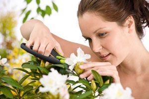 Consejos para cortar las flores. Cómo cortar las flores para que duren más tiempo. Técnicas para cortar flores de forma correcta