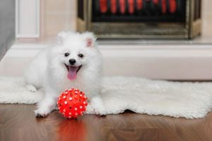 Cómo Elegir Juguetes Seguros para Perros