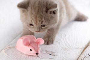 Consejos para elegir juguetes para el gato. Como elegir juguetes seguros para nuestro gato. Juguetes para el gato