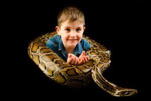 Cómo Tener a una Serpiente de Mascota