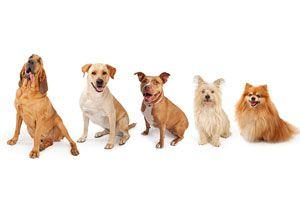 Consejos para elegir un Perro