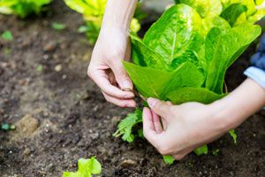 Cómo hacer una Huerta en casa sin tener Jardín
