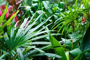 Cómo elegir Plantas para un Jardín Tropical. Plantas tropicales para tu jardín