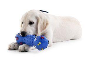 Consejos para elegir Accesorios para Mascota. Como comprar en una tienda para mascotas