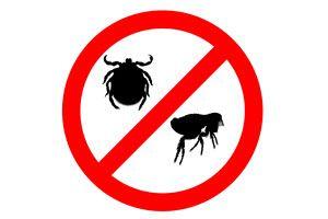 Eliminar pulgas de la casa. Eliminar garrapatas. Eliminar Pulgas y Garrapatas de perros y gatos