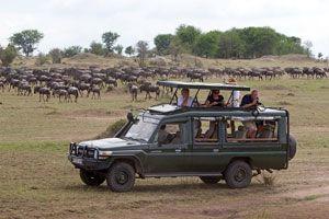 Cómo comportarse en una visita a una reserva animal abierta