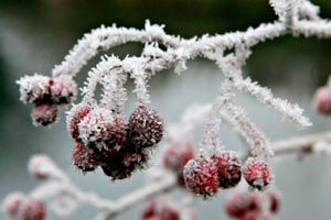 Ilustración de Cómo proteger las plantas de las heladas