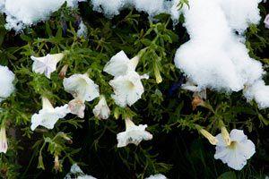 Cómo cuidar las plantas en invierno.