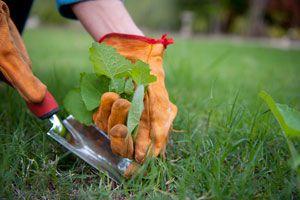 Cómo eliminar las malezas del jardín