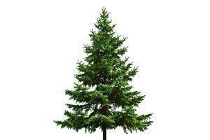 Ilustración de Cómo renovar un viejo árbol de Navidad