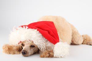 Cómo proteger a nuestra mascota durante las fiestas