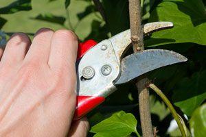 Cómo Cortar las Plantas al Podarlas