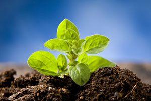 Cómo sembrar hierbas aromáticas según la época del año