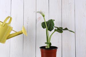 Cómo cuidar las plantas de interior en verano