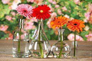 Ilustración de Cómo conservar las flores en un florero