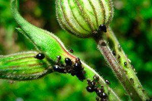 Ilustración de Cómo eliminar insectos comunes del jardín